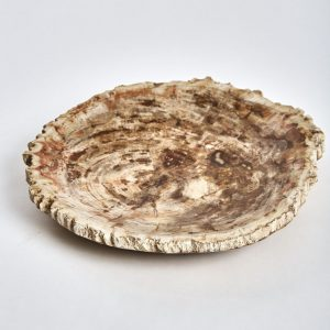 petrified wooden plate