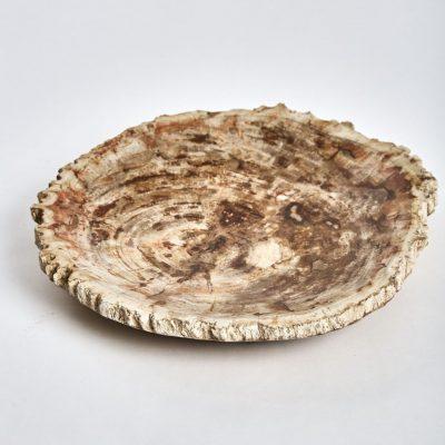 petrified wooden plate