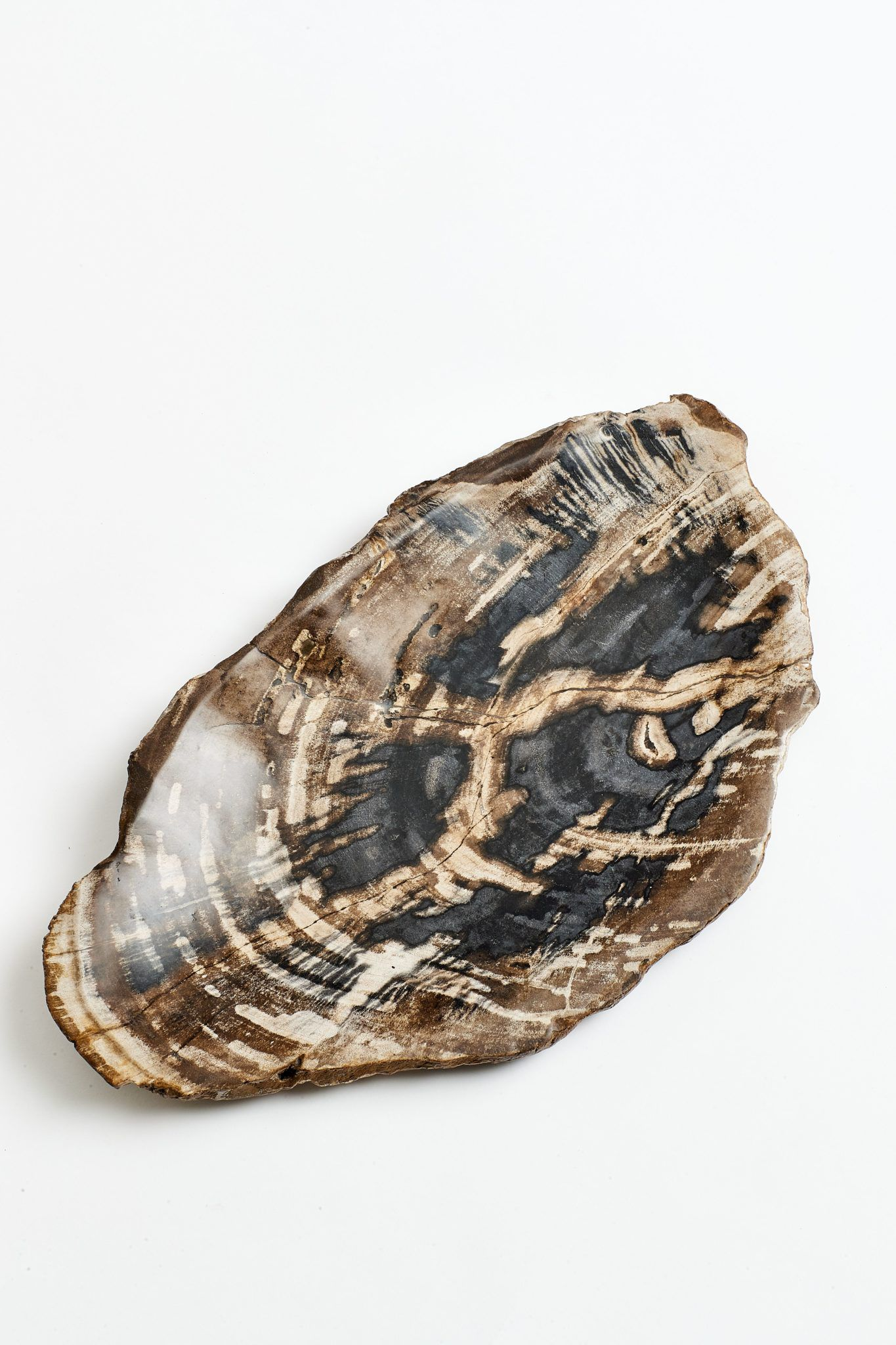 petrified-wood-platter-swatch